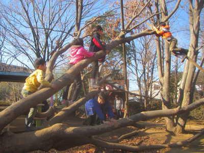 (写真)倒れてしまった大きな木に子どもたちが登っている様子。